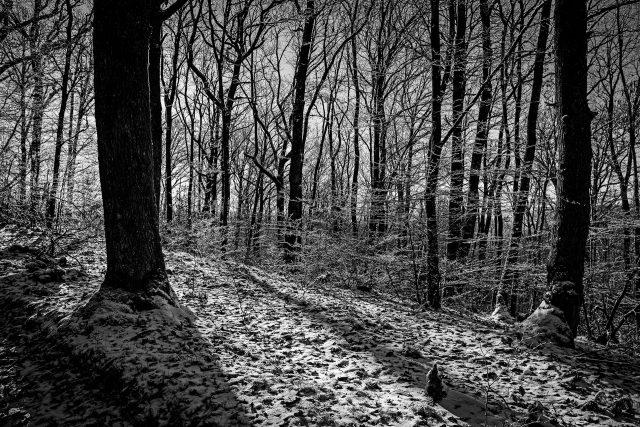 Sun through the forest